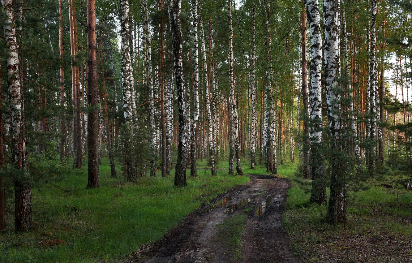 Photo wallpaper road, forest, Tver oblast