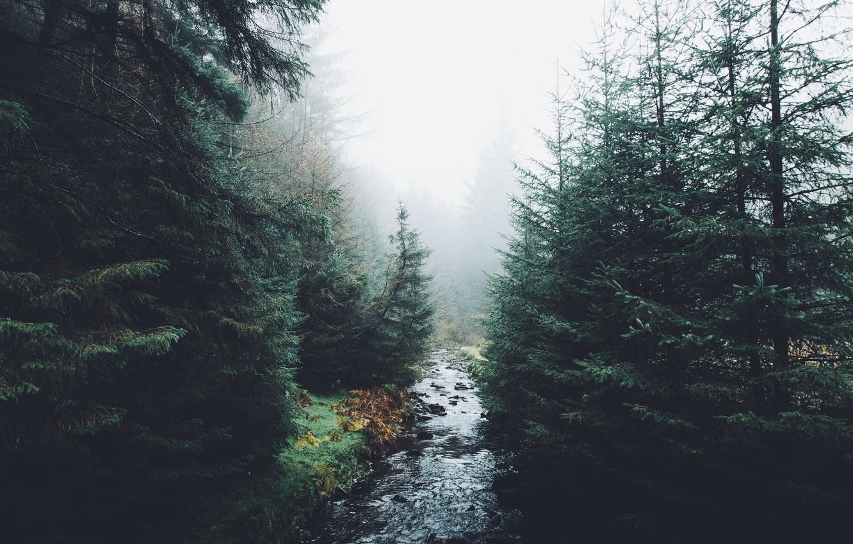 Photo wallpaper autumn, forest, nature, river, haze