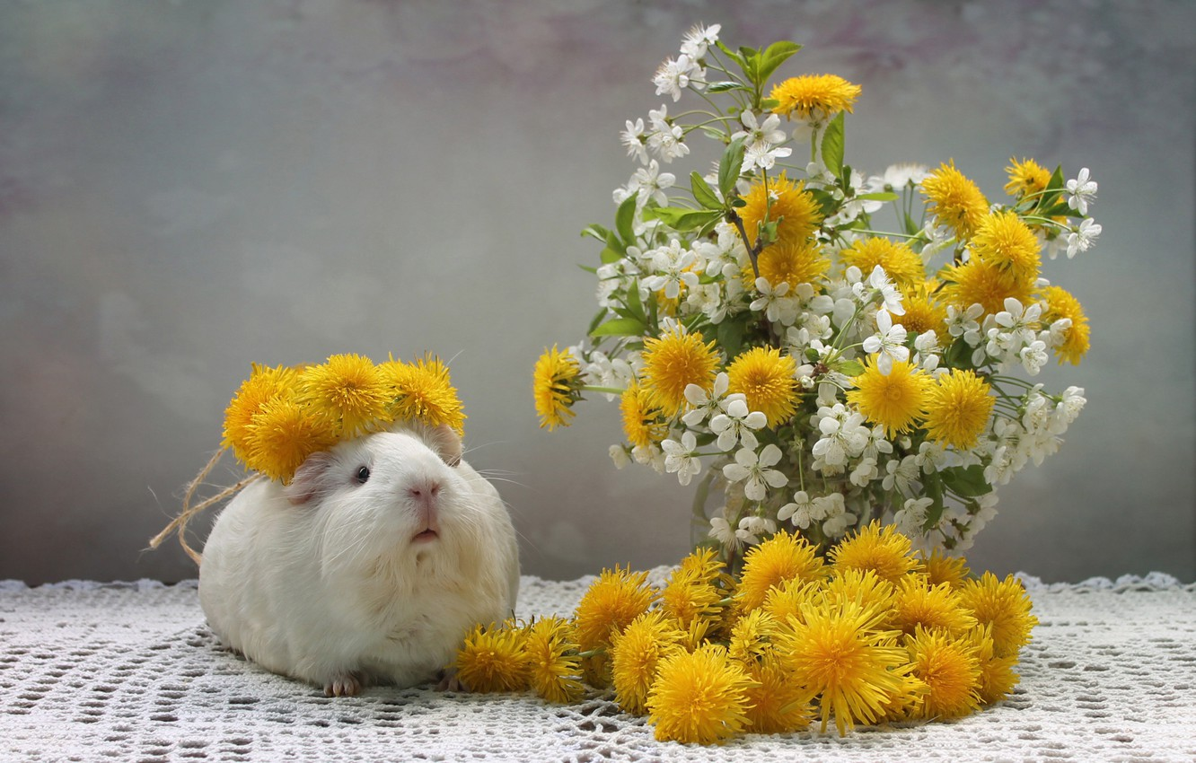 Photo wallpaper flowers, Guinea pig, dandelions, wreath, tablecloth
