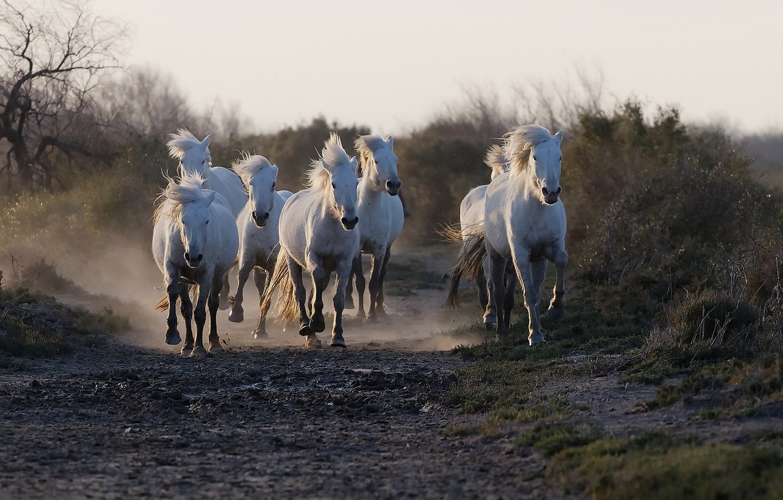 Photo wallpaper road, horses, running