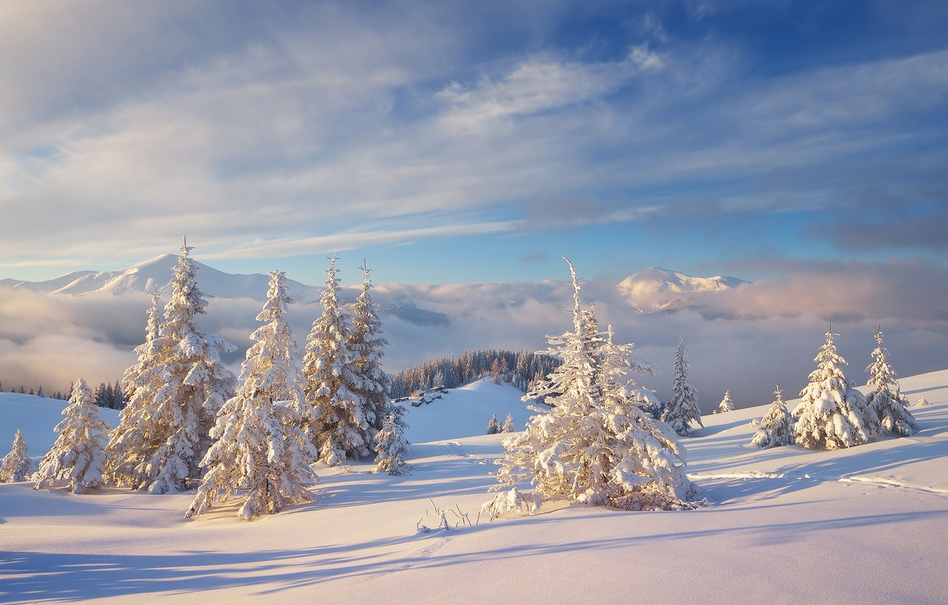 Photo wallpaper cold, winter, forest, the sky, clouds, snow, landscape, mountains, nature, hills, ate, frost, the snow, …
