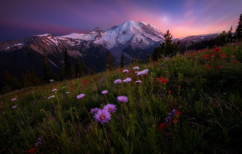 Photo wallpaper Sky, Landscape, Sun, Rainier, Mount, Wildflowers