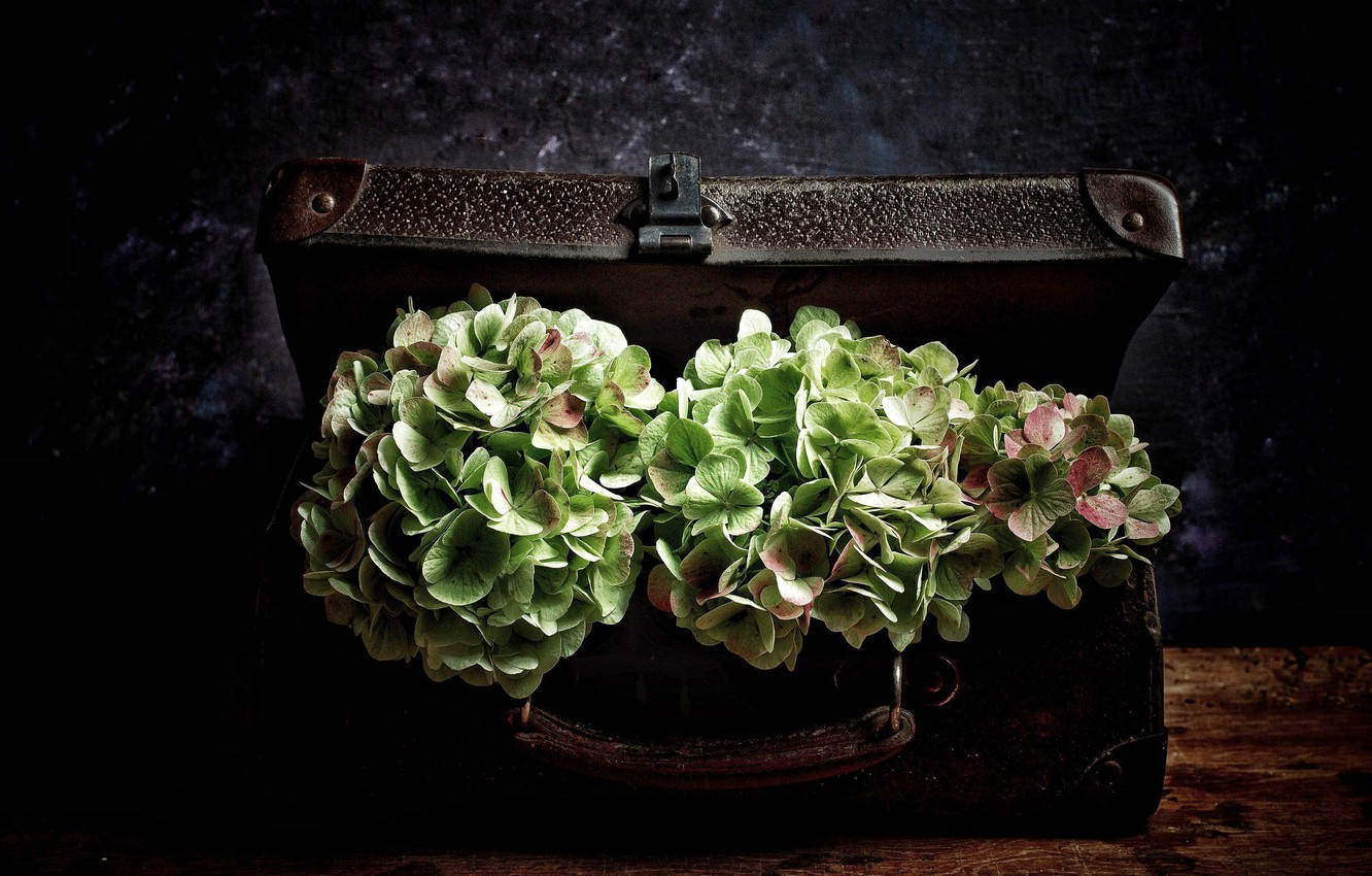 Photo wallpaper flowers, suitcase, vintage, hydrangea, bouquets