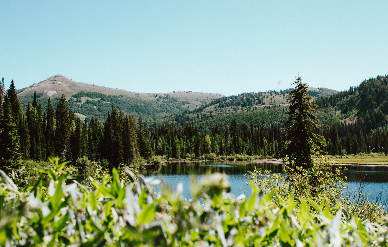 Photo wallpaper trees, mountains, lake, hills