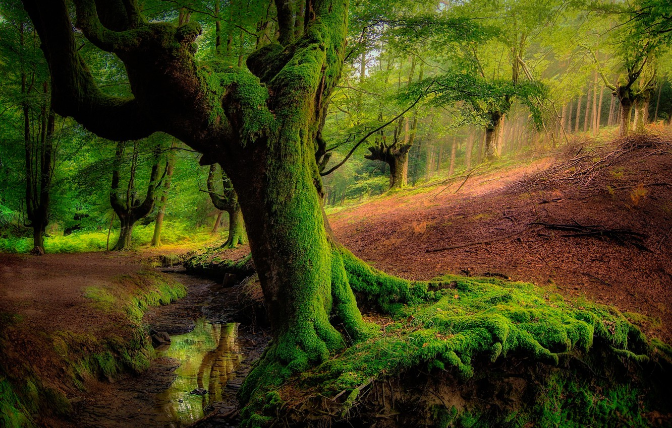 Photo wallpaper greens, forest, water, trees, moss, slope