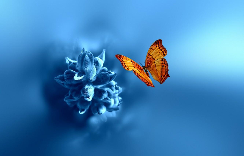 Photo wallpaper flower, macro, nature, butterfly, bokeh