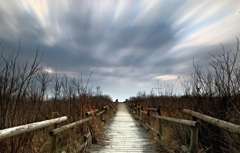 Photo wallpaper bridge, nature, the evening