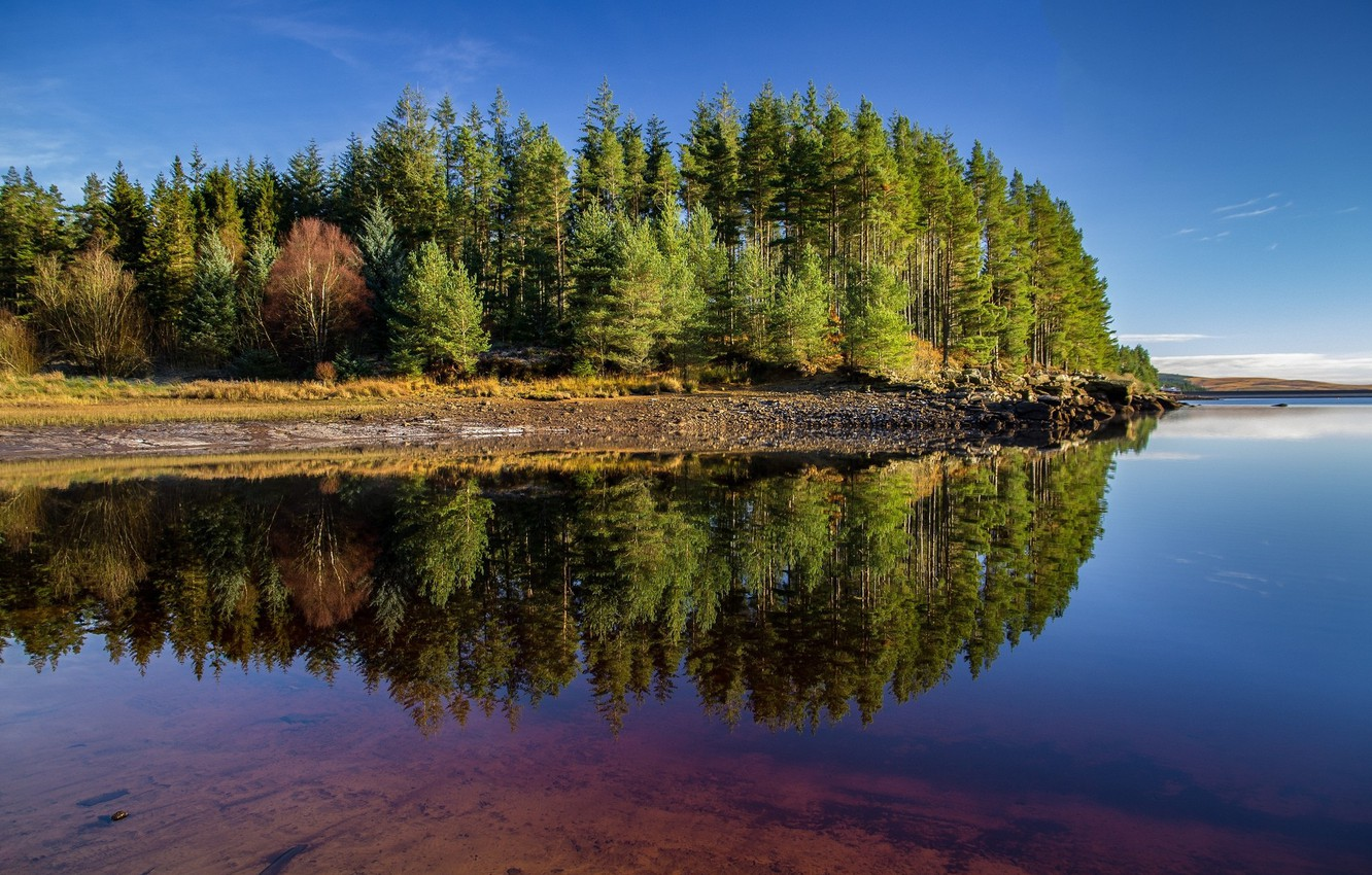 Photo wallpaper Reflection, Lake, Trees, Forest
