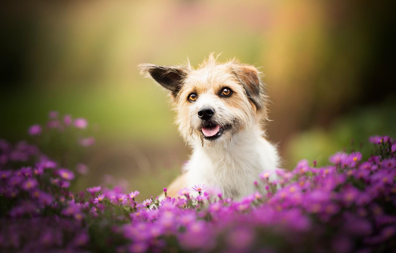 Photo wallpaper flowers, dog, bokeh, doggie