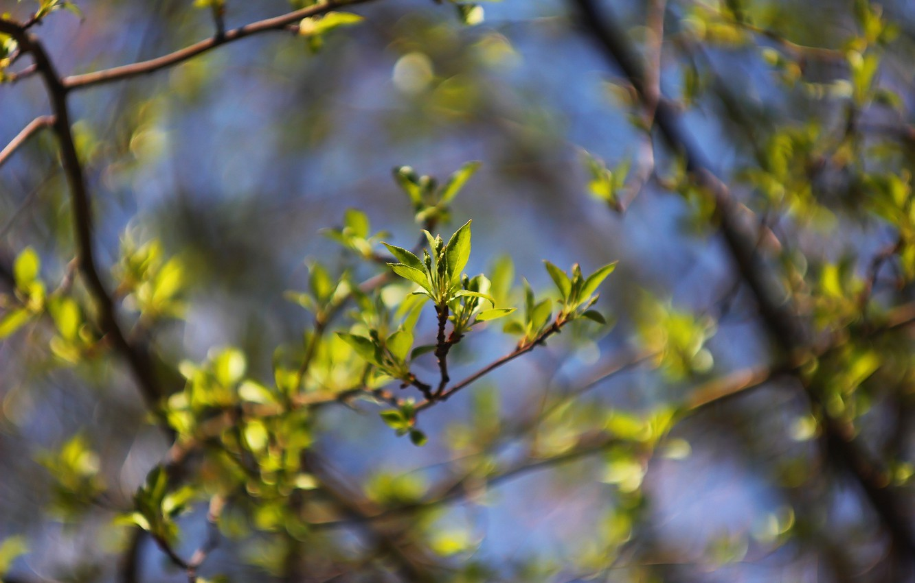 Photo wallpaper nature, background, spring, leaves