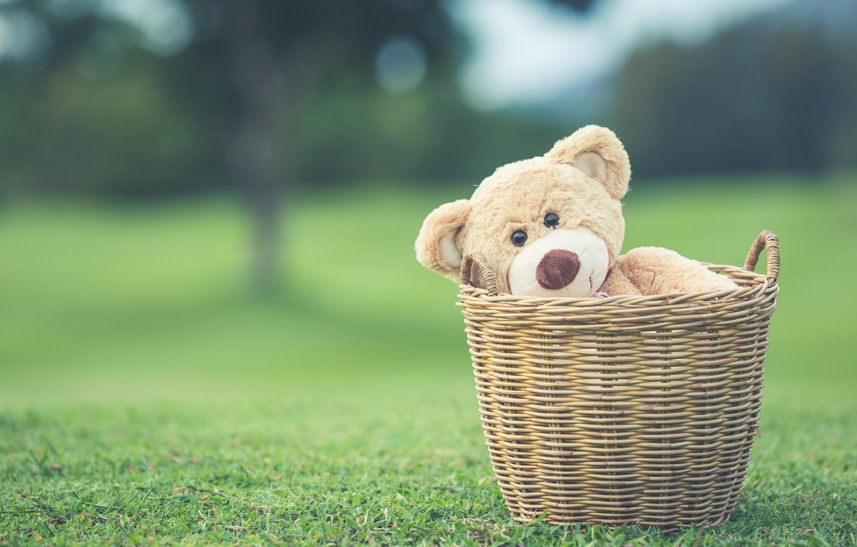 Wallpaper Summer Basket Toy Bear Bear Summer Vintage Bear