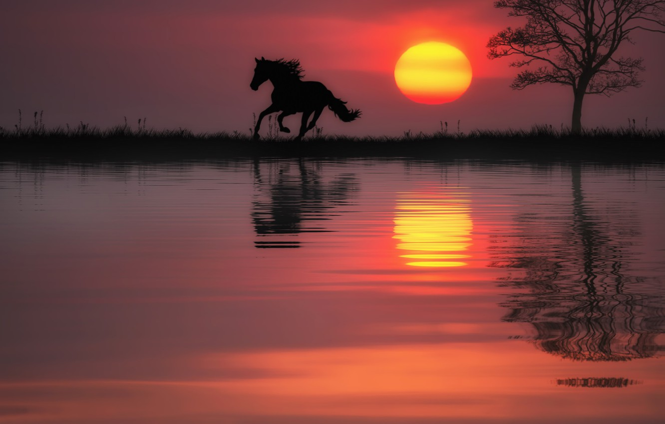 Photo wallpaper water, the sun, sunset, reflection, tree, horse, horse