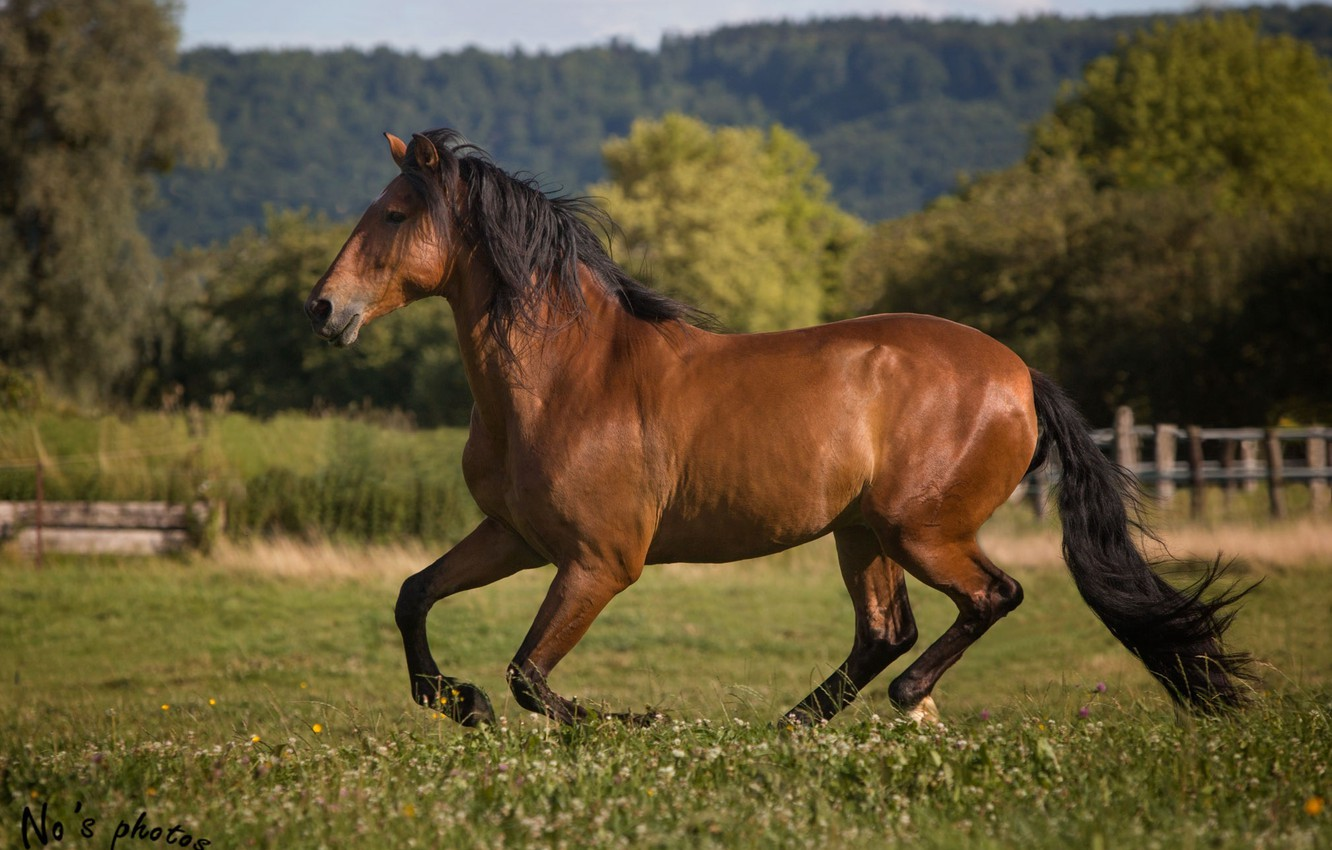 Photo wallpaper summer, movement, horse, horse, power, running, grace, corral, gallop, chestnut