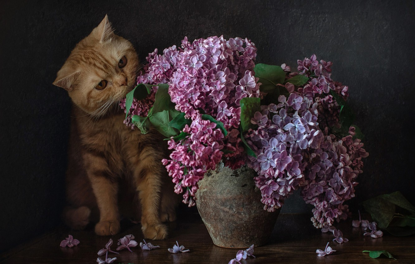 Photo wallpaper bouquet, lilac, red cat, cat