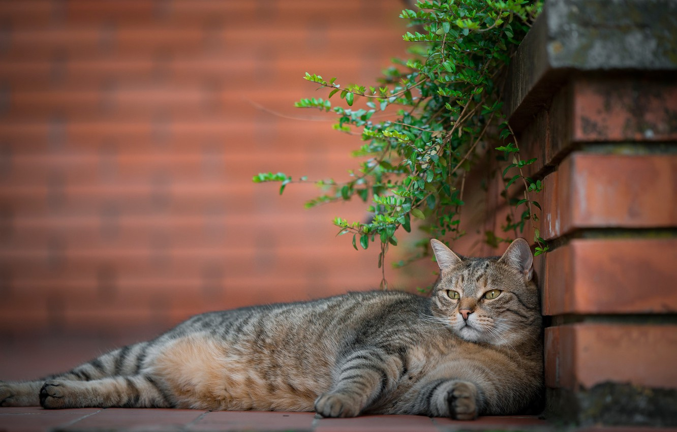 Photo wallpaper cat, stay, chill