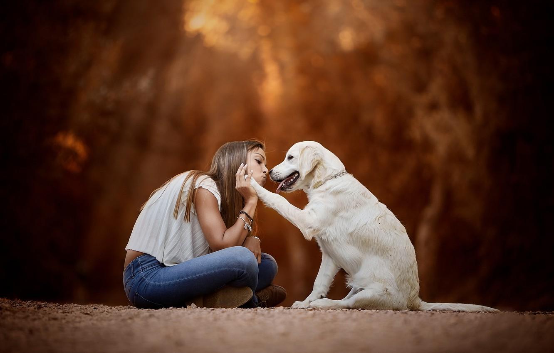 Photo wallpaper mood, dog, friendship, girl, friends, bokeh, Golden Retriever, Golden Retriever