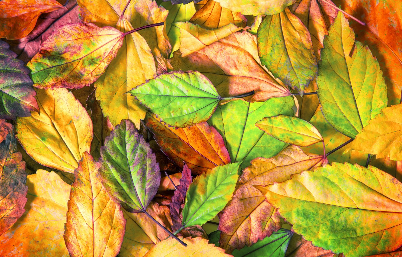 Photo wallpaper autumn, leaves, background, colorful, texture, background, autumn, leaves, autumn