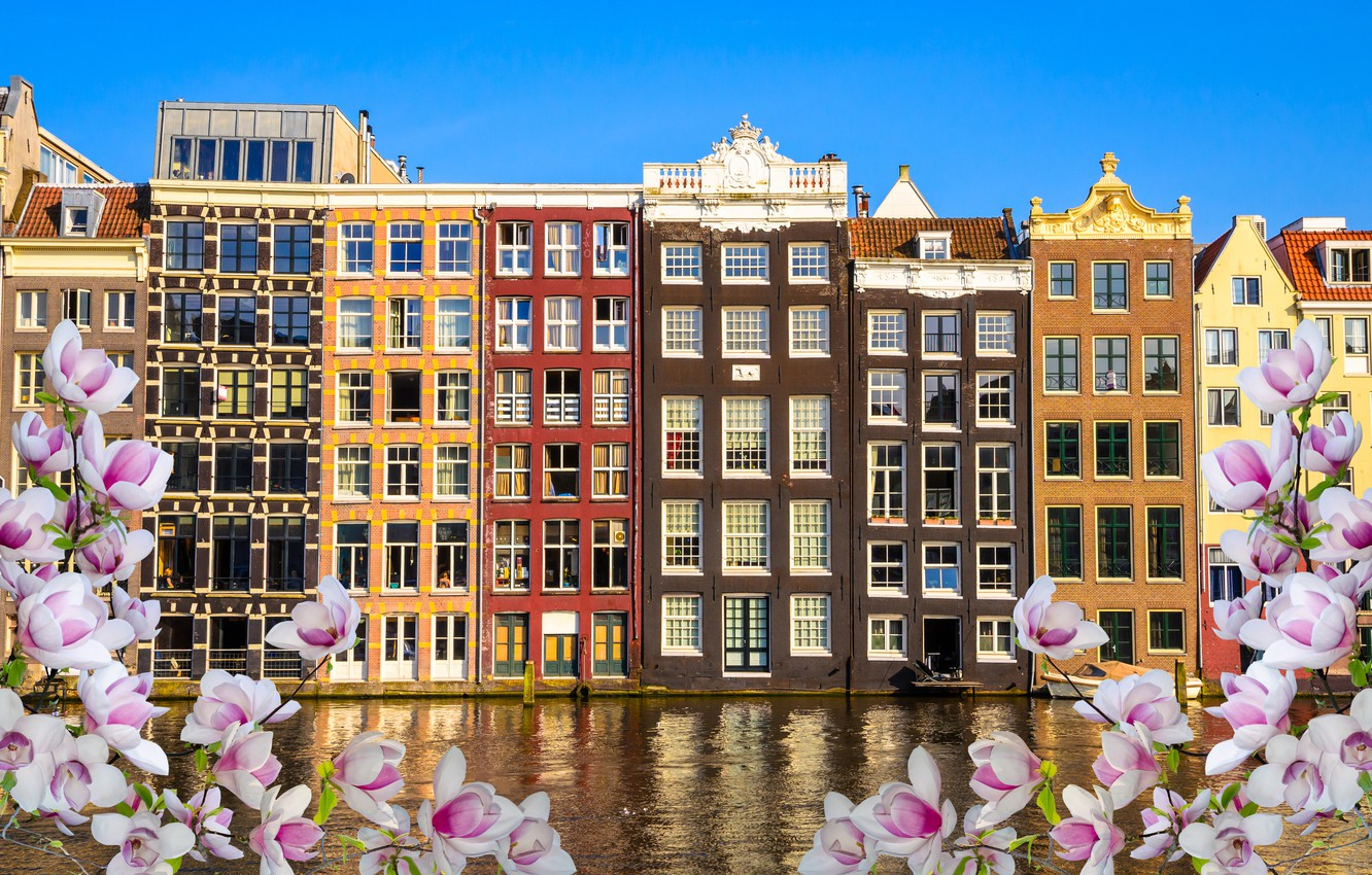 Photo wallpaper river, spring, Amsterdam, flowering, blossom, Amsterdam, flowers, old, spring, buildings, Netherlands, canal