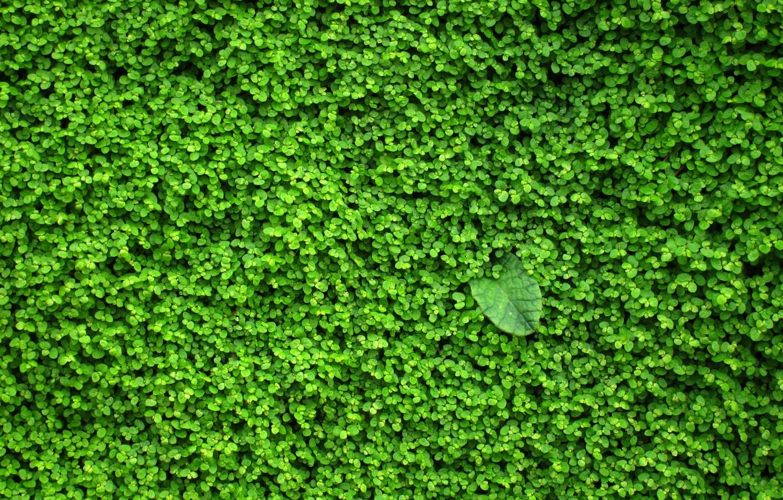 Photo wallpaper greens, wall, plant, leaves