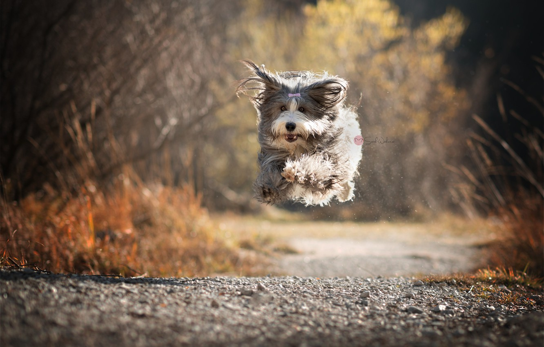 Photo wallpaper road, dog, running, flight