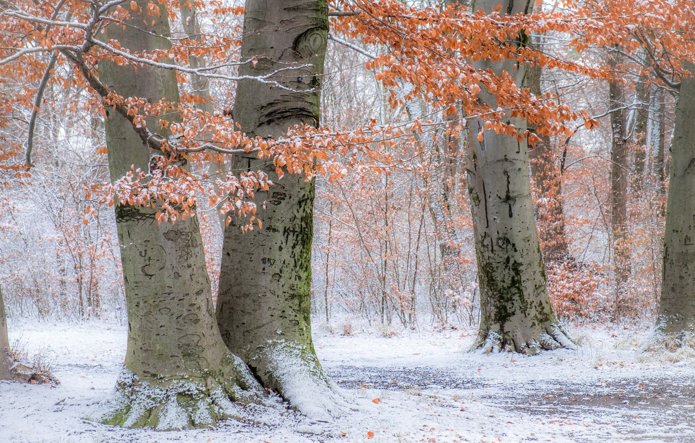 Photo wallpaper autumn, snow, trees, Park, Germany, Munich, Bayern, Germany, Munich, Bavaria, English garden, English Garden