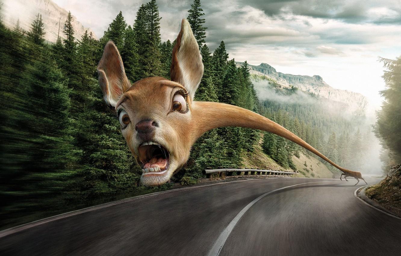 Photo wallpaper road, animals, fear, danger