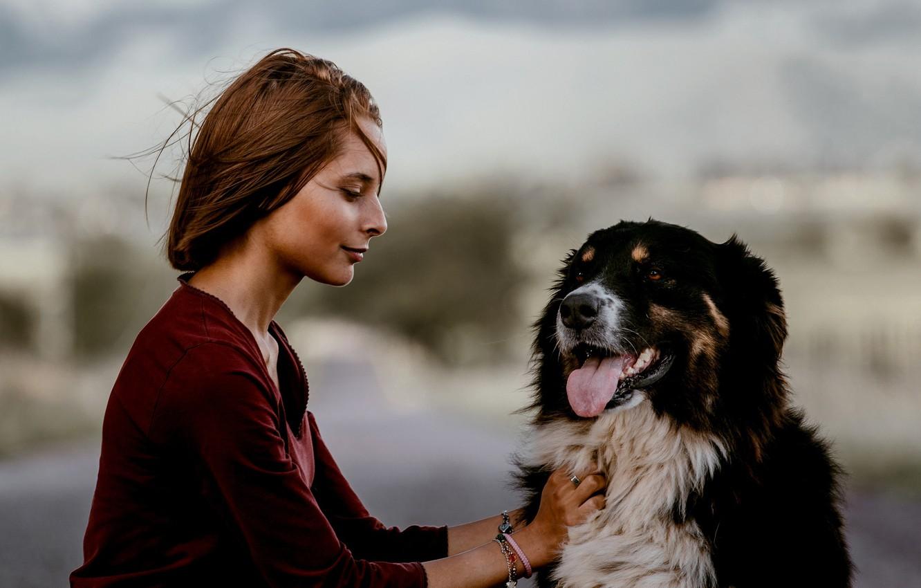 Photo wallpaper girl, mood, dog