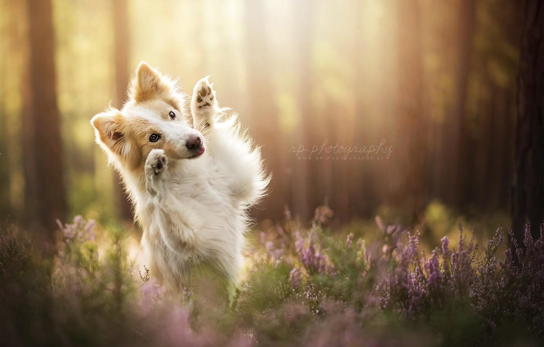Photo wallpaper summer, each, dog
