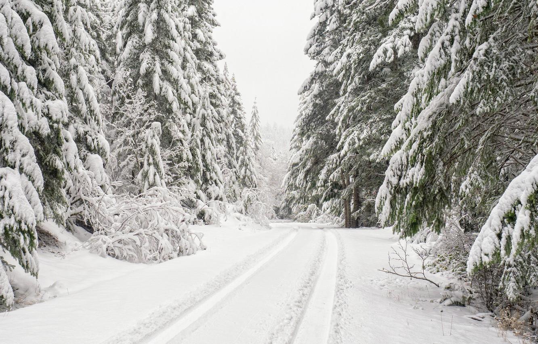 Photo wallpaper winter, road, forest, snow, trees, ate, Washington, Washington, Olympic National Forest, National forest Olympic