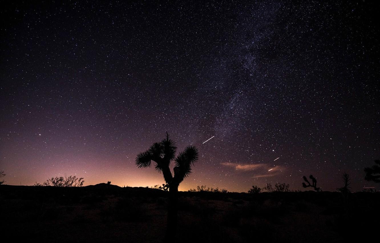 Wallpaper The Sky Stars Night Desert Joshua Tree Images For Desktop Section Pejzazhi Download