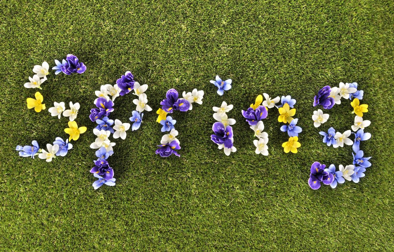 Photo wallpaper grass, flowers, spring, grass, flowers, spring