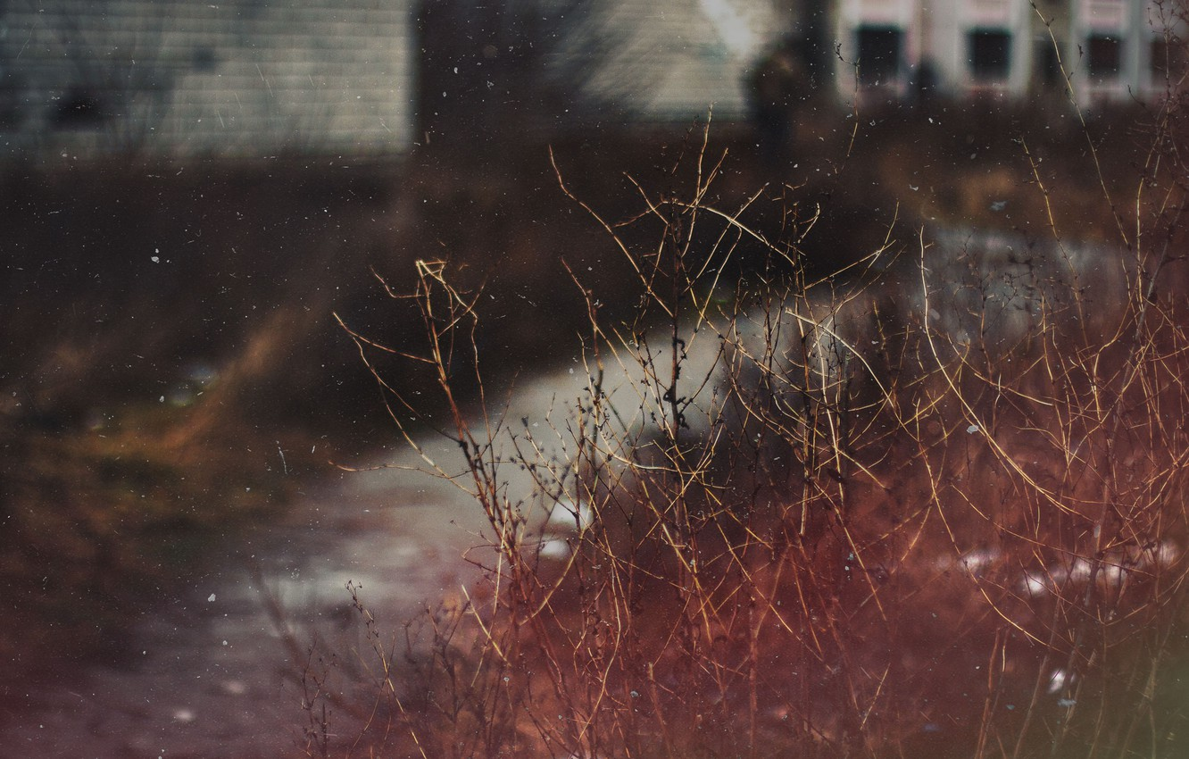 Photo wallpaper sadness, dark colors, Bush, scratches, dust and scratches