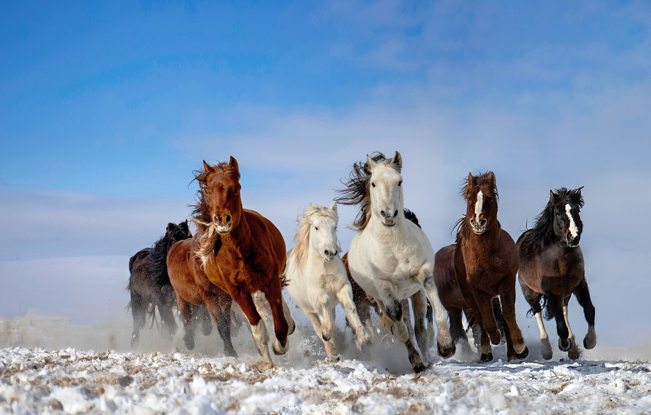 Photo wallpaper the sky, snow, horse, the herd