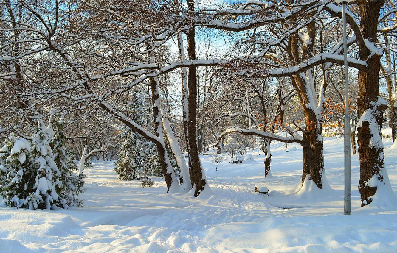 Photo wallpaper Winter, Trees, Snow, Rays, Park, Winter, Park, Snow, Trees