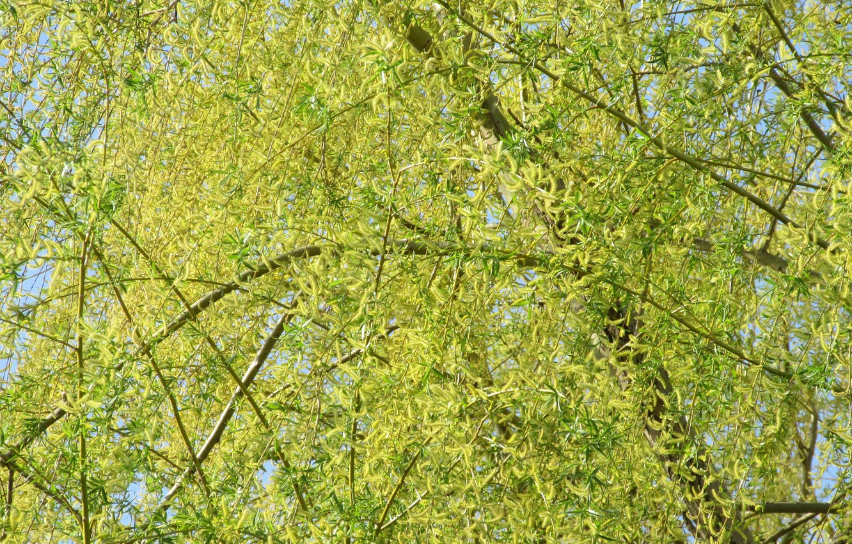 Photo wallpaper tree, IVA, spring 2018, mamala ©