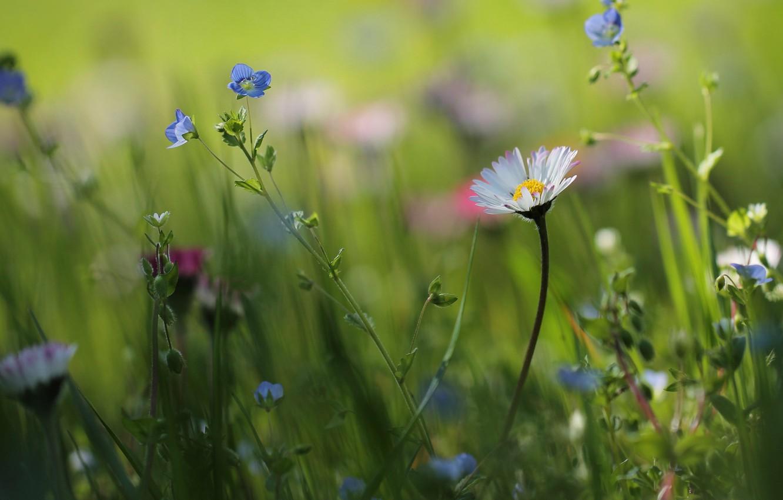Photo wallpaper summer, grass, flowers