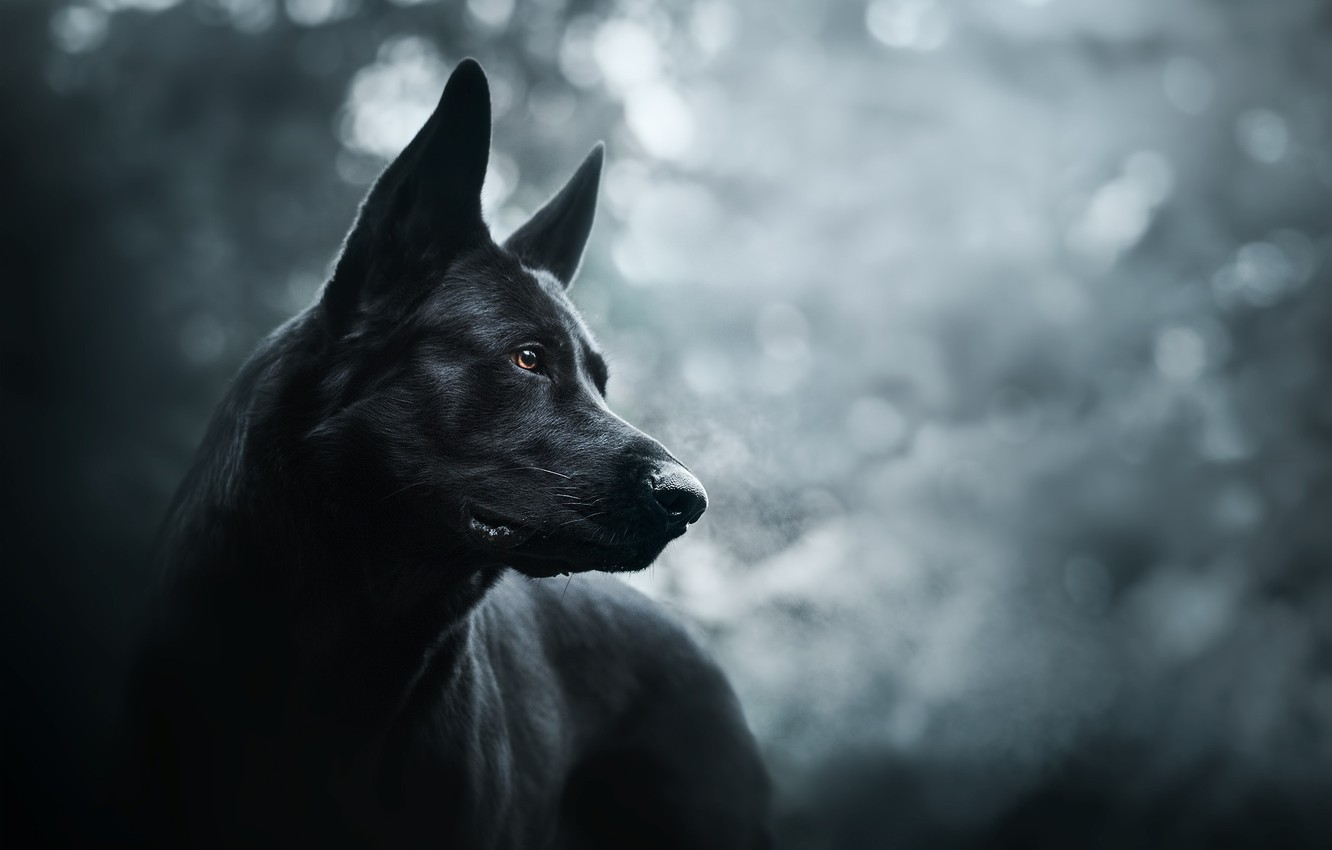 Wallpaper Each Dog Prince Of Darkness Images For Desktop