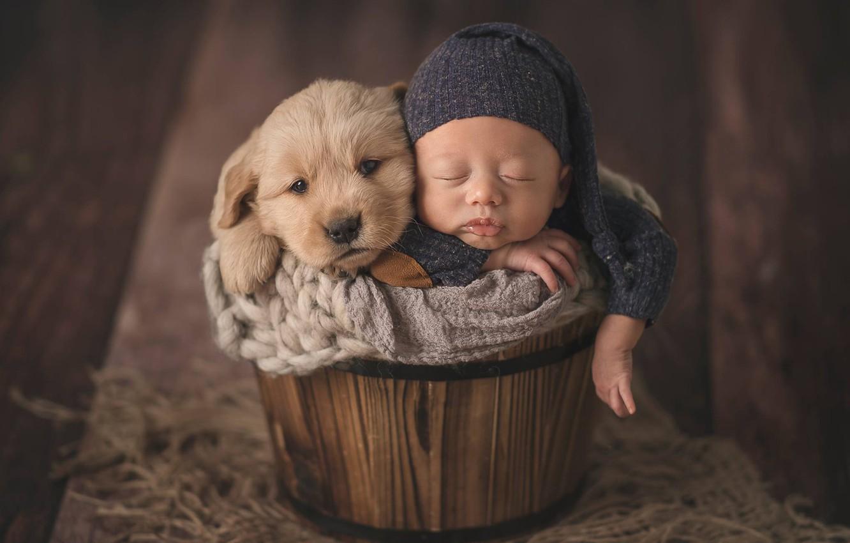 Photo wallpaper mood, sleep, dog, baby, puppy, child, cap, baby, the barrel, sleep