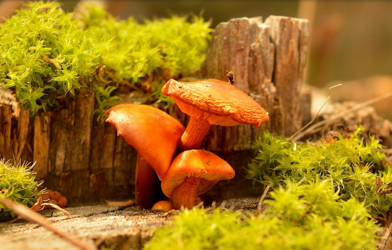 Photo wallpaper nature, Mushrooms, Mushrooms
