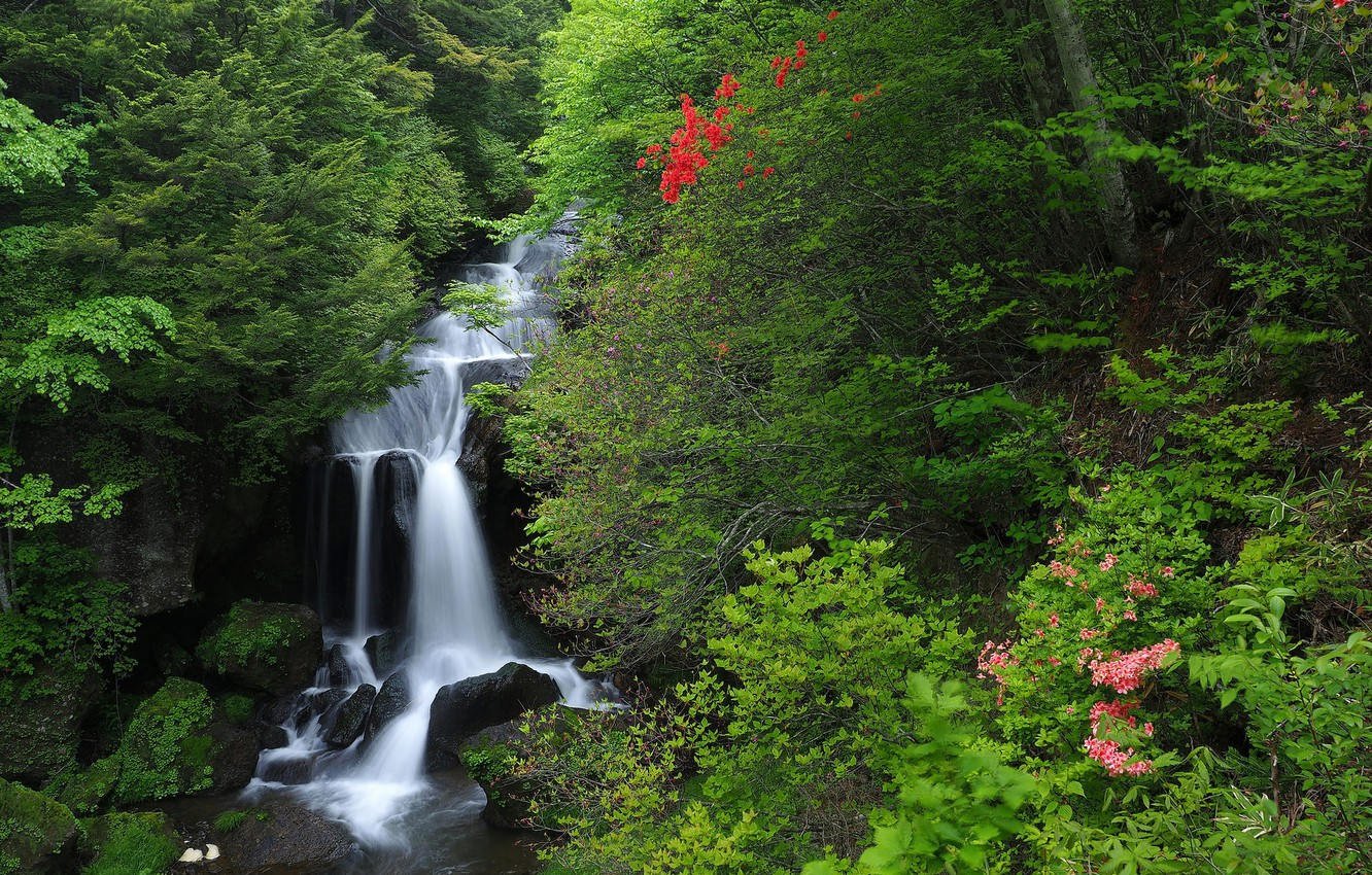 Photo wallpaper forest, waterfall, Japan, Japan, cascade, Honshu, Honshu, Nikko National Park, National Park Nikko