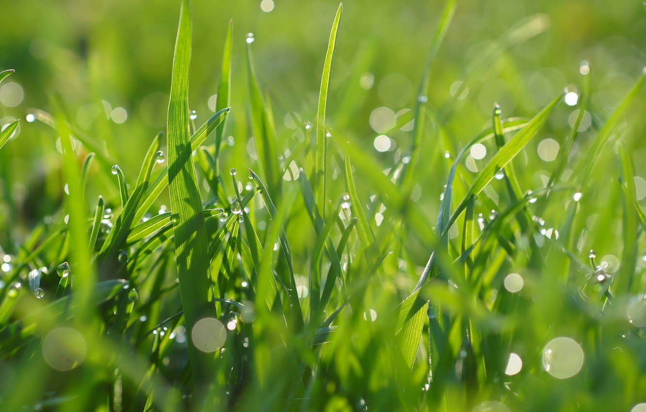 Photo wallpaper grass, drops, green