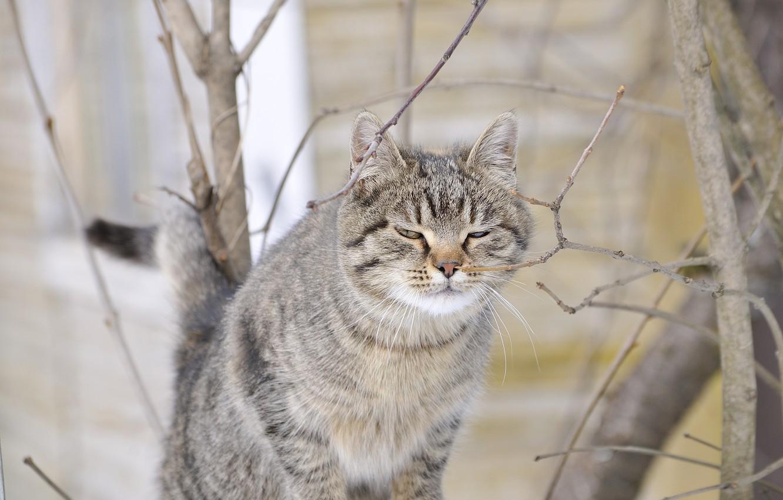 Photo wallpaper cat, spring, murrrr