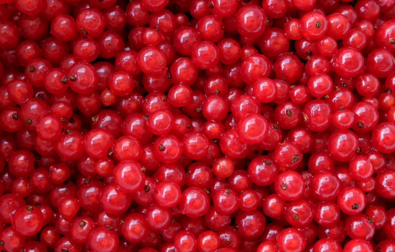 Photo wallpaper berries, texture, red currant, Kislenko