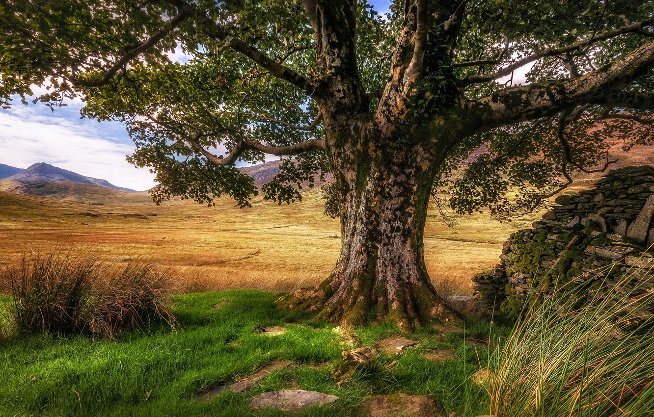 Photo wallpaper grass, mountains, tree, Wales, Snowdonia