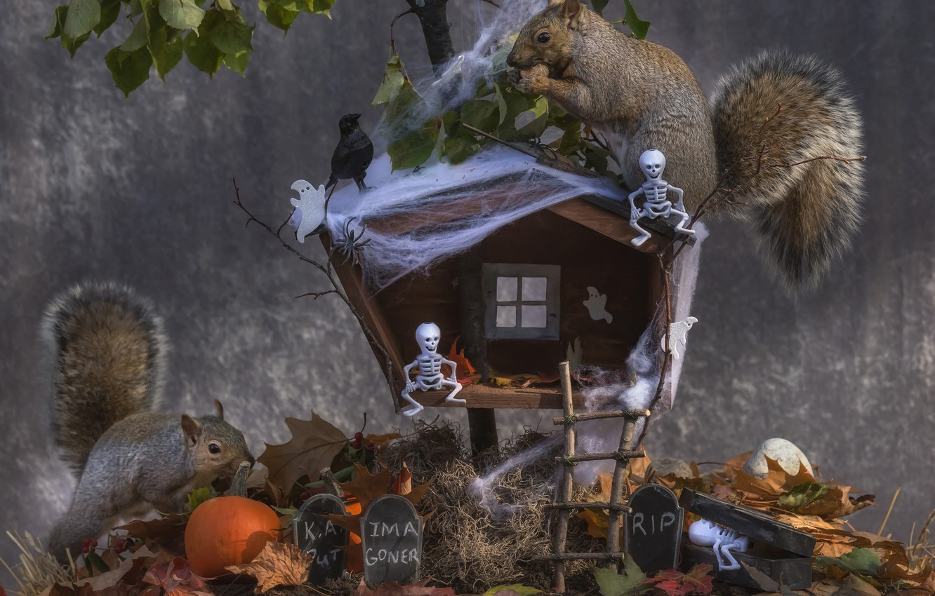 Photo wallpaper autumn, leaves, hut, pumpkin, Halloween, bird, proteins, skeletons