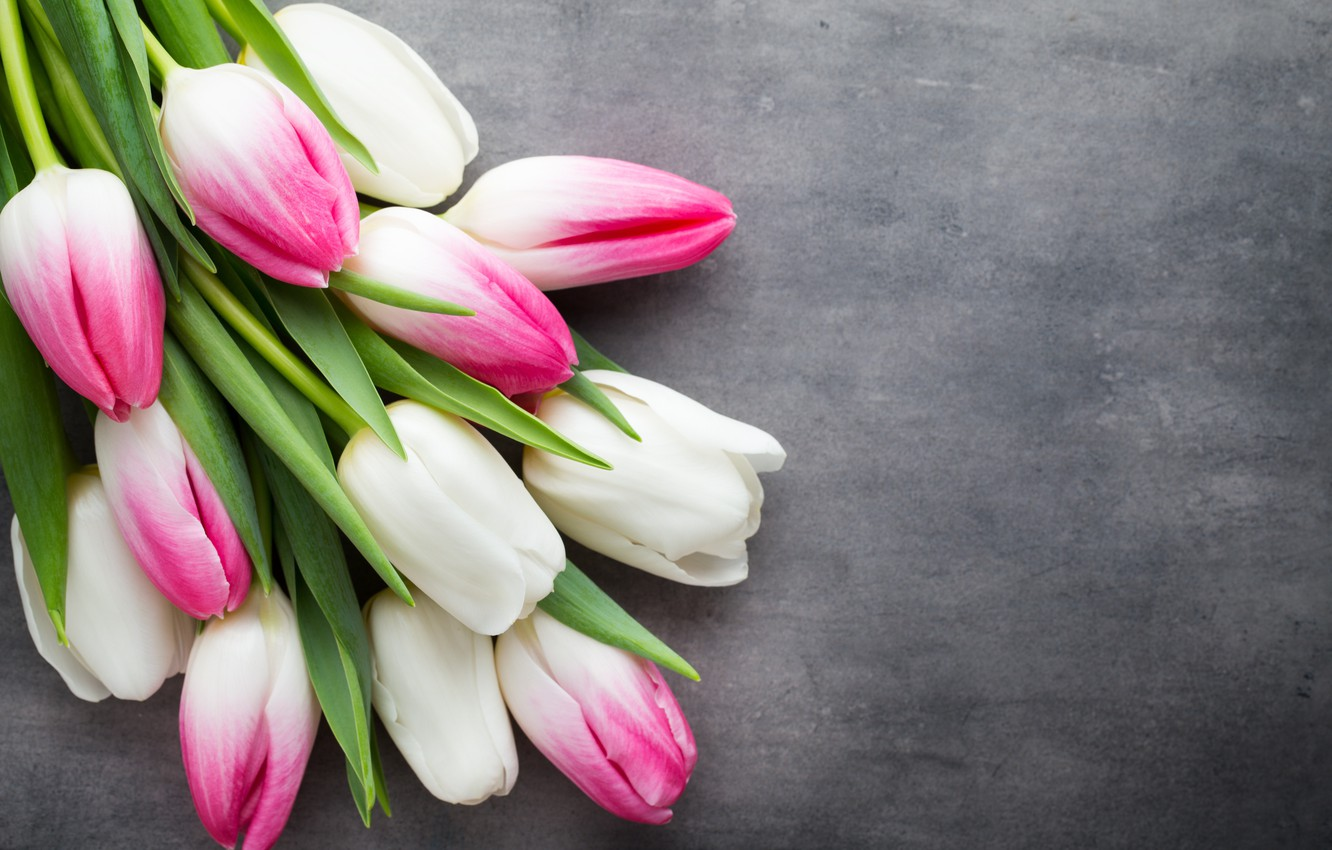 Wallpaper Flowers Bouquet Tulips Pink White White Fresh Pink Flowers Beautiful Tulips Spring Images For Desktop Section Cvety Download