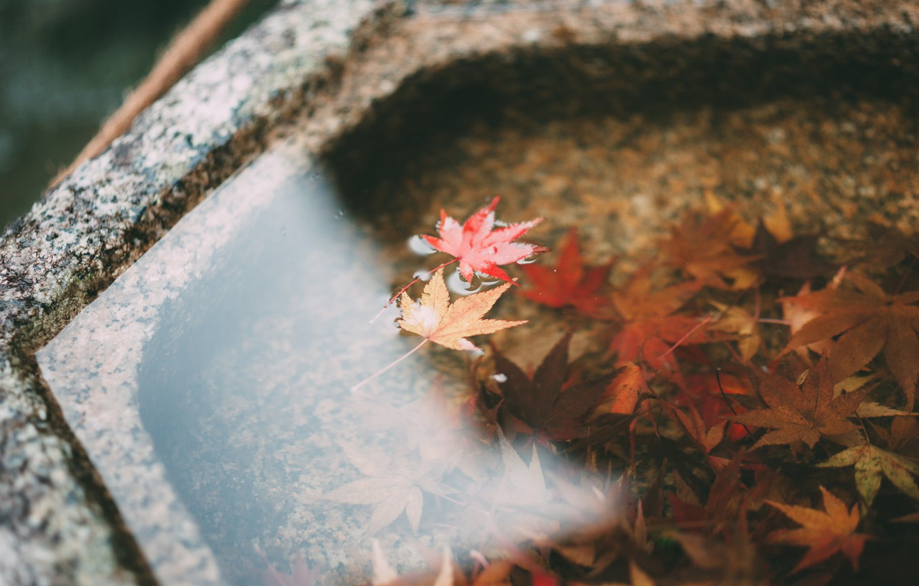 Photo wallpaper autumn, leaves, water