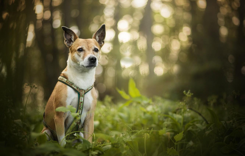 Photo wallpaper greens, glare, dog, bokeh, Luna