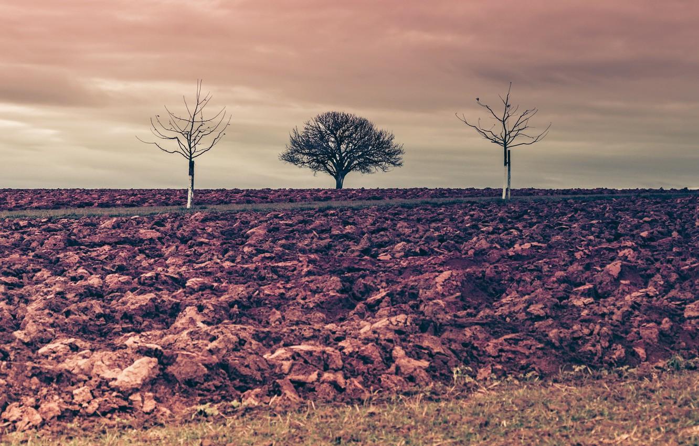 Photo wallpaper trees, nature, earth, arable land