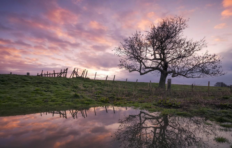 Photo wallpaper sunset, pond, tree